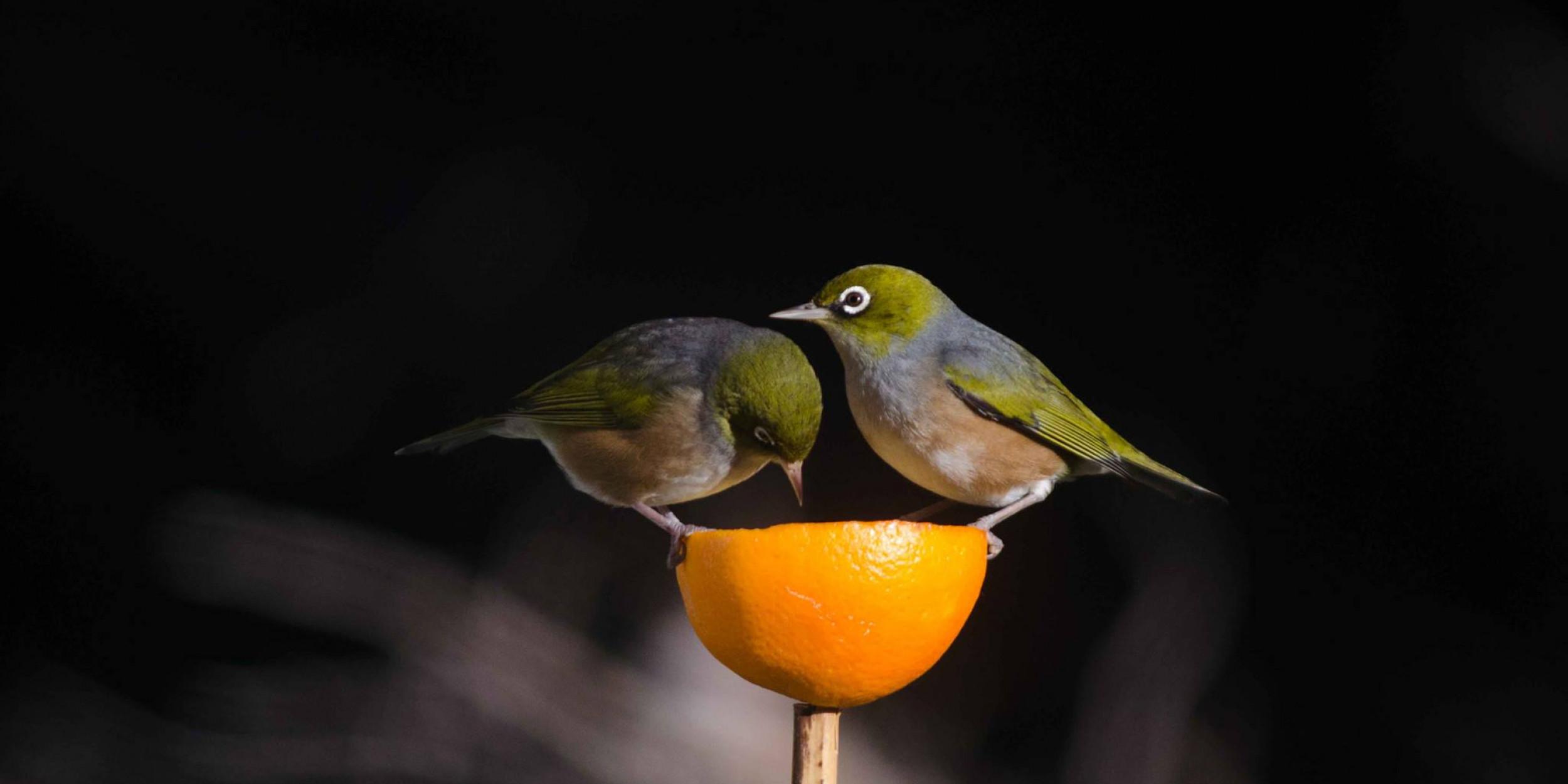 en pictures image photo garden view bird stock feeder domain free public