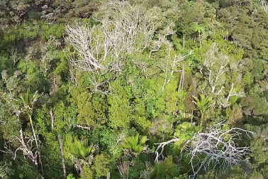 Northland Forest Collapse, predator destruction.