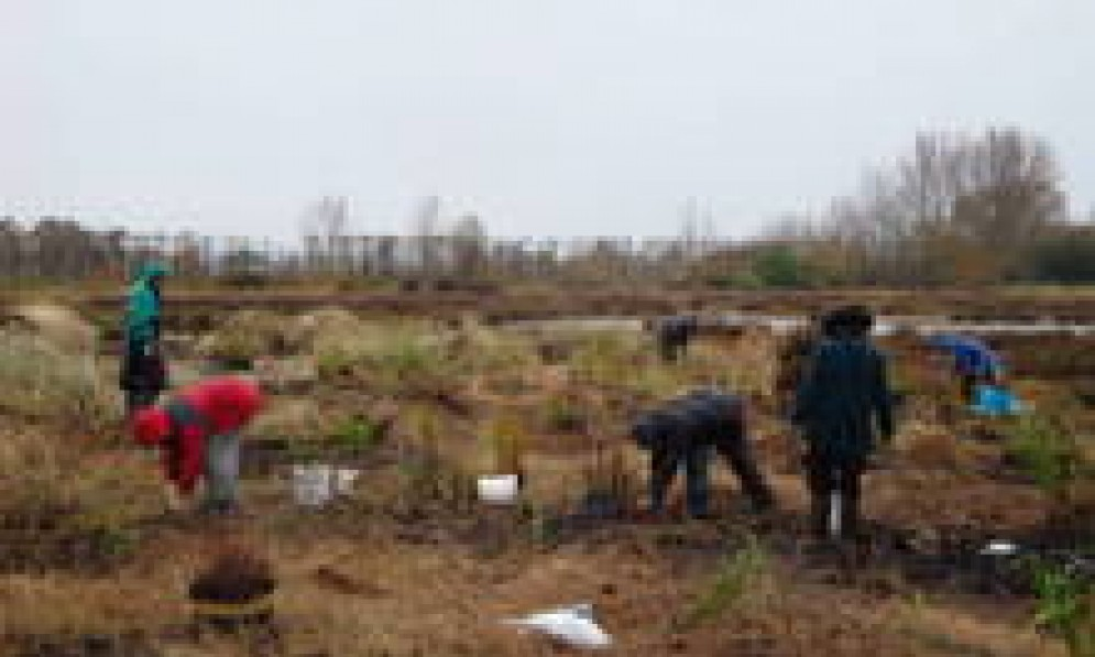 Local conservationists planted several hundred native plants on a wet morning.