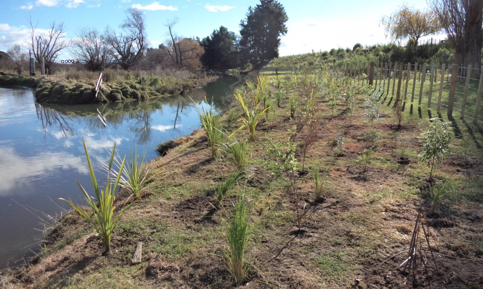 Pukahu stream with recent planting on the riverbank