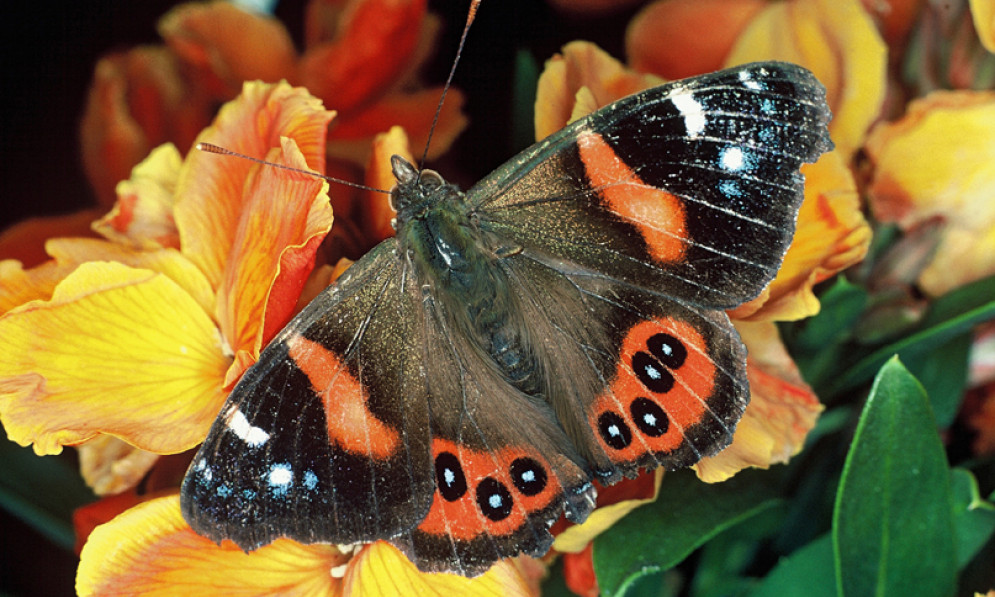 a red admiral butterfly sitting on a flower