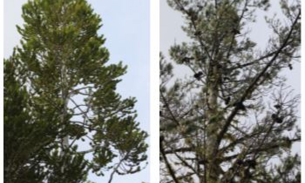 Different trees have different NET values
