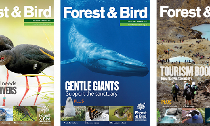 Forest & Bird Magazine cover samples