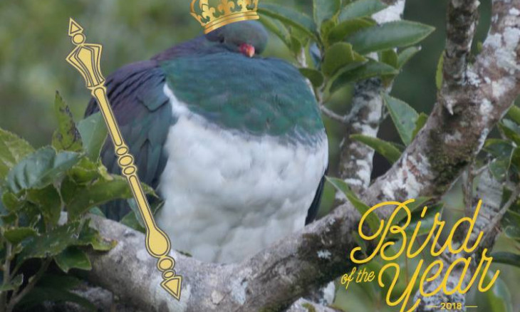 Kereru with a crown and septer