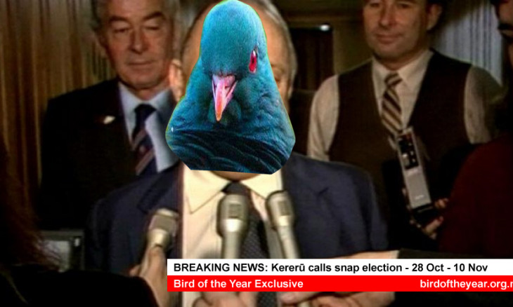 Meme of Robert Muldoon with a kereru head as he calls a snap election