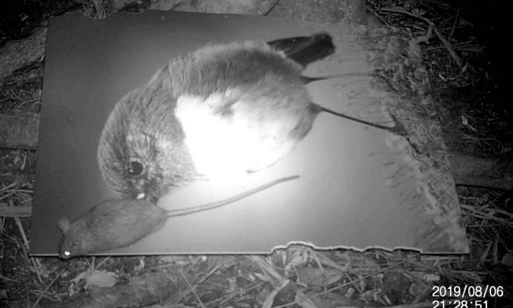 night vision of rat eating poster