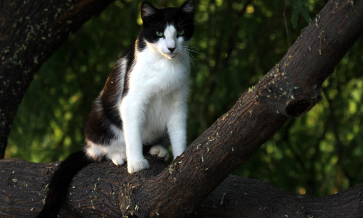 Feral cat in a tree