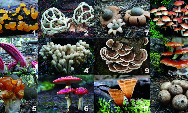 12 species of fungi to guess