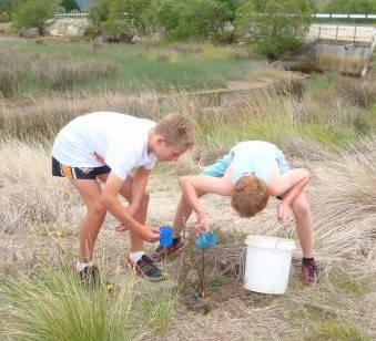 Two young folk planting a coastal ribbonwood at the Riwaka mouth sand spit