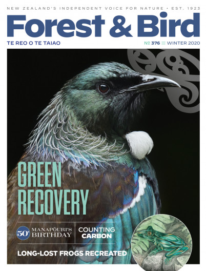 Forest & Bird magazine Winter 2020 cover with a close up of a tūī